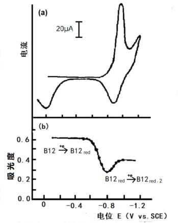 图4-3  1mmol/L 维生素B12的伏安法,Britton-Robinson 缓冲溶液pH6.86,Hg-Au网栅光透电极 a.薄层循环伏安法 b. 388nm处的吸光度对电位作图[3]
